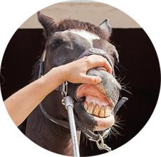 Korekcja zębów