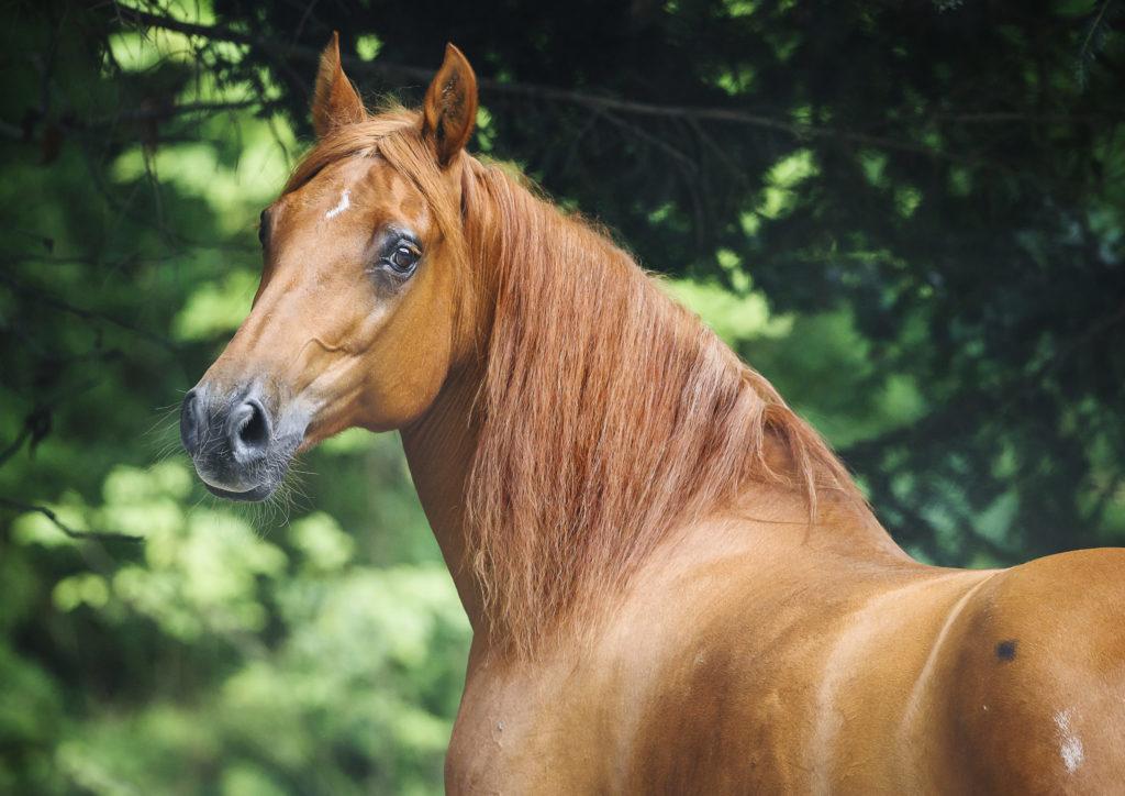 Wymiana sierści u konia