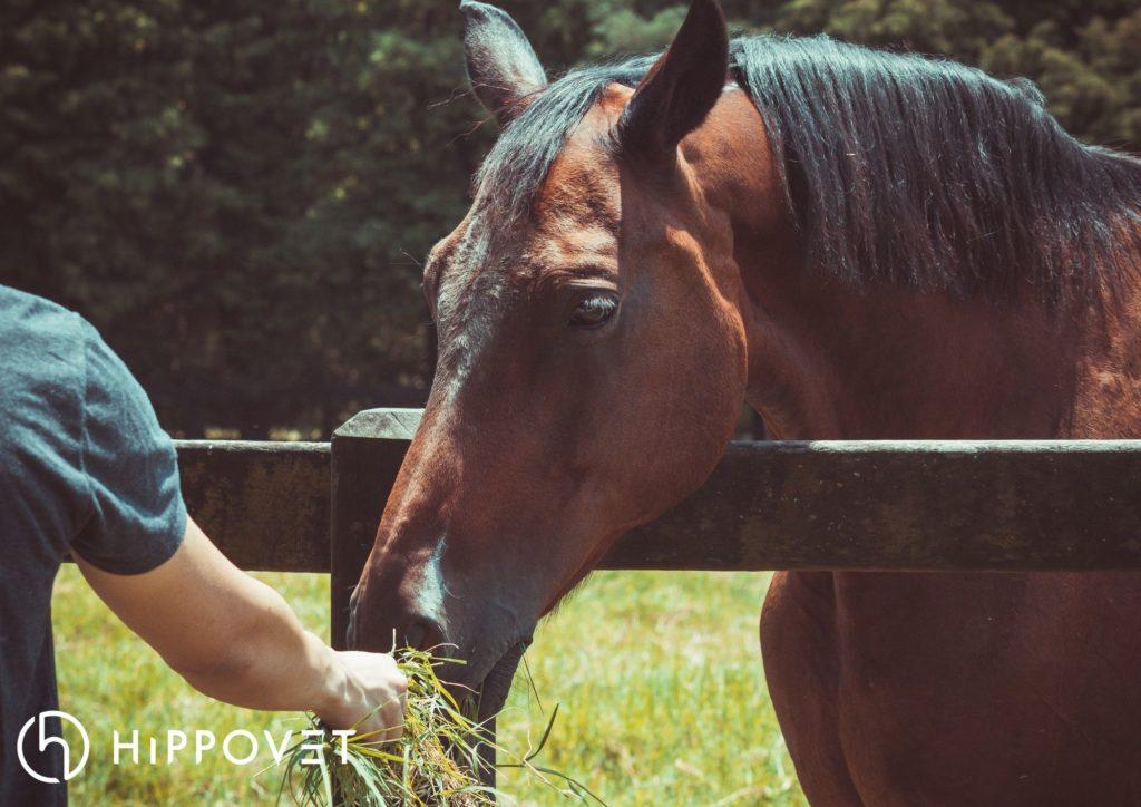 Białko w diecie konia