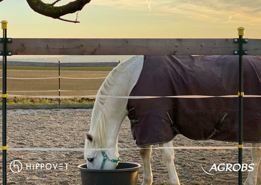 ALPENGRÜN MASH - jako wsparcie zdrowego trawienia koni
